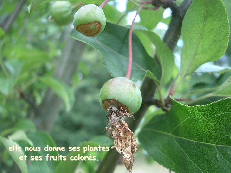 elle nous donne ses plantes et ses fruits colorés.