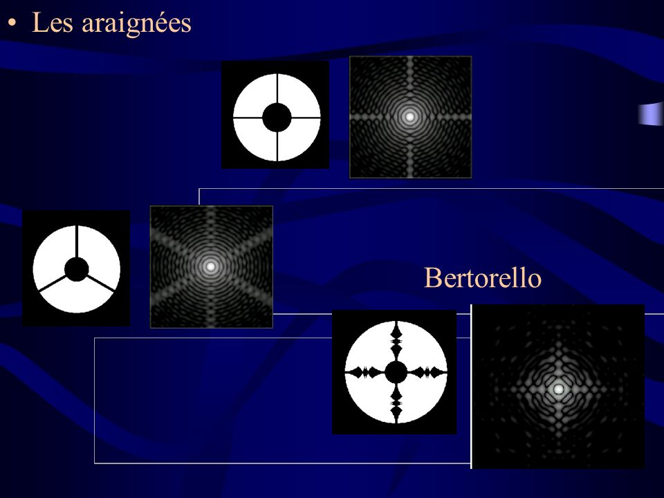 Les araignées Bertorello