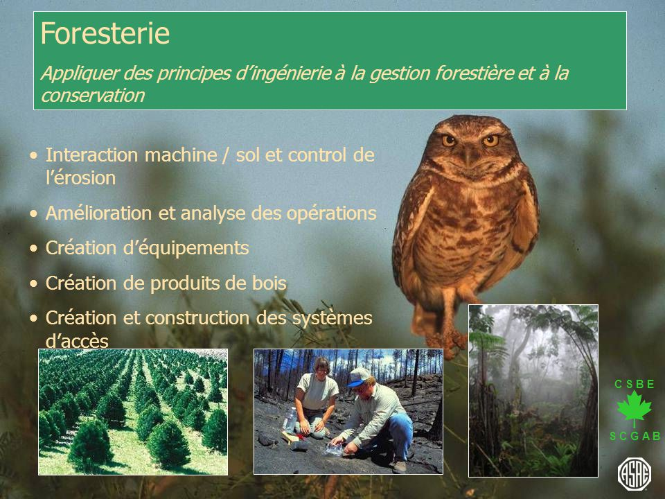 Foresterie Interaction machine / sol et control de l'érosion