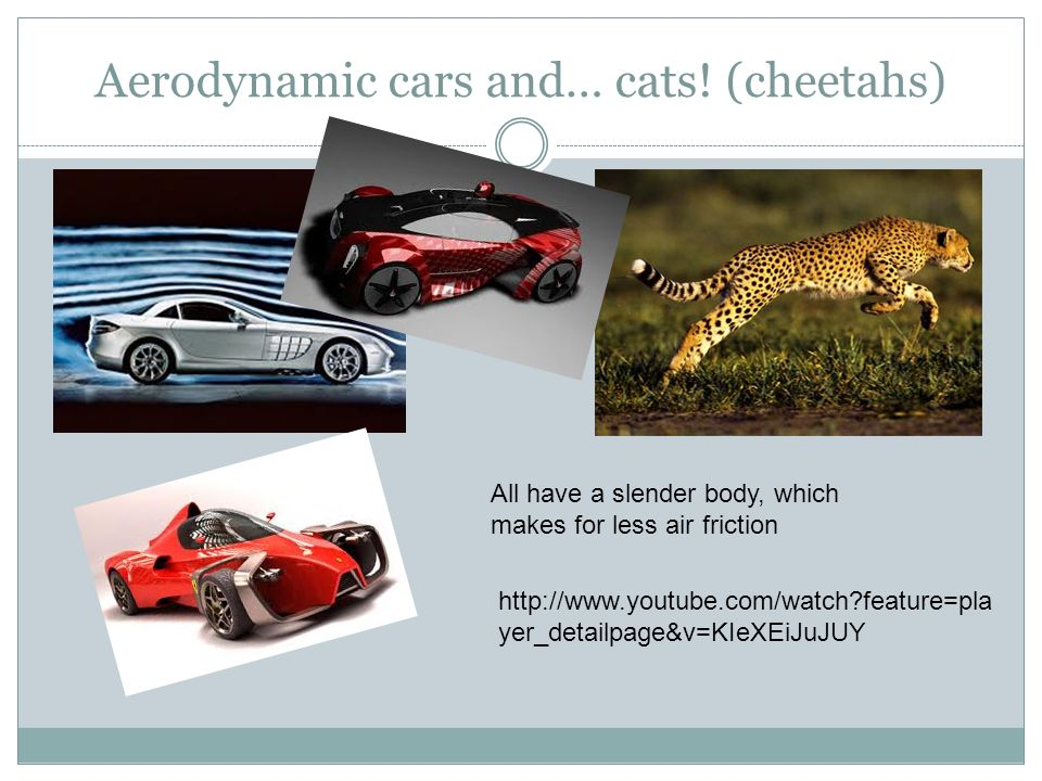 Aerodynamic cars and… cats! (cheetahs)