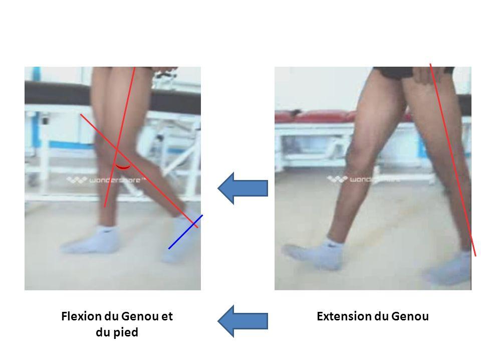 Flexion du Genou et du pied