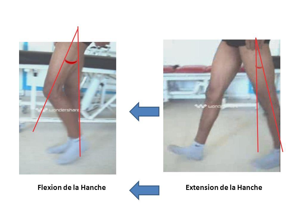 Flexion de la Hanche Extension de la Hanche