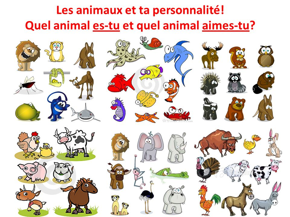 Les animaux et ta personnalité