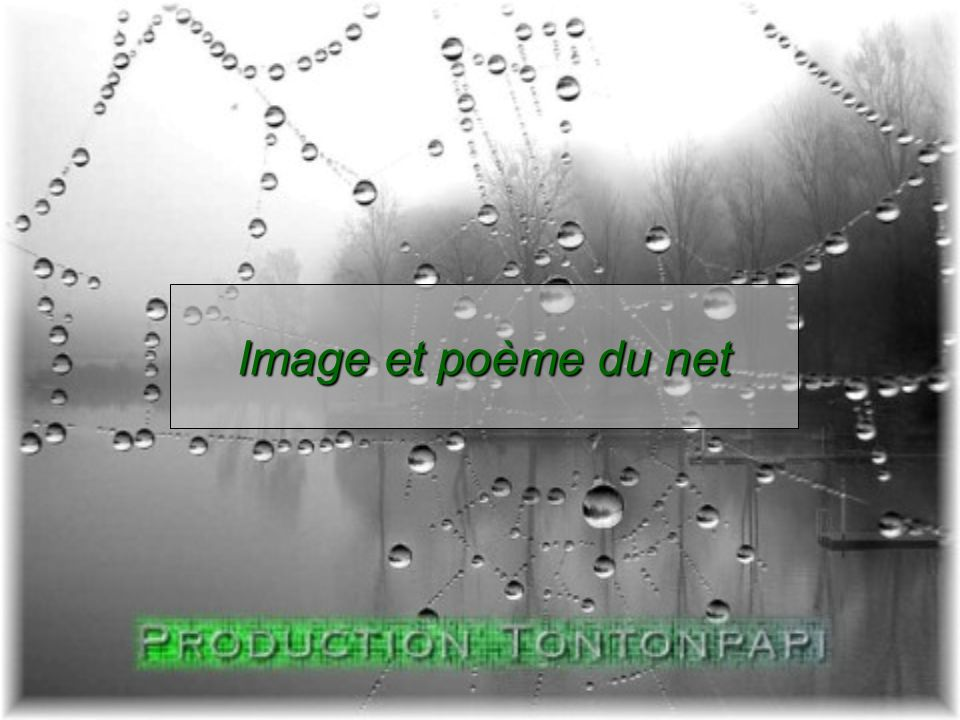 Image et poème du net