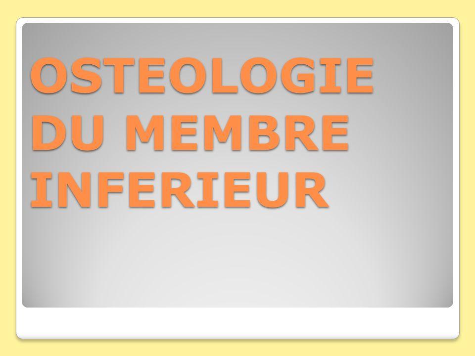 OSTEOLOGIE DU MEMBRE INFERIEUR