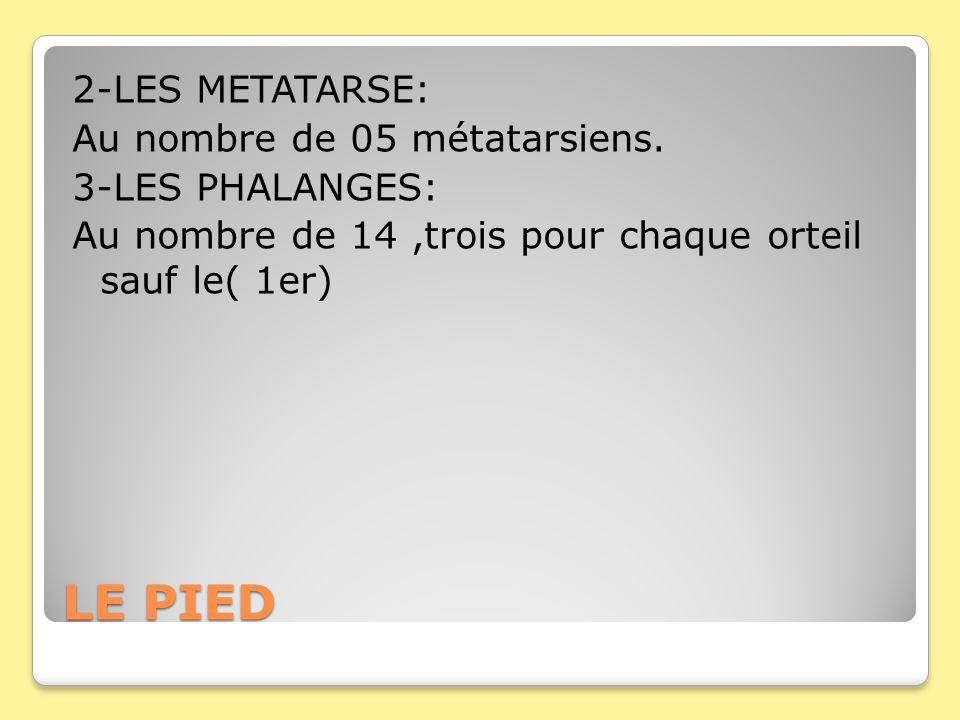 LE PIED 2-LES METATARSE: Au nombre de 05 métatarsiens.