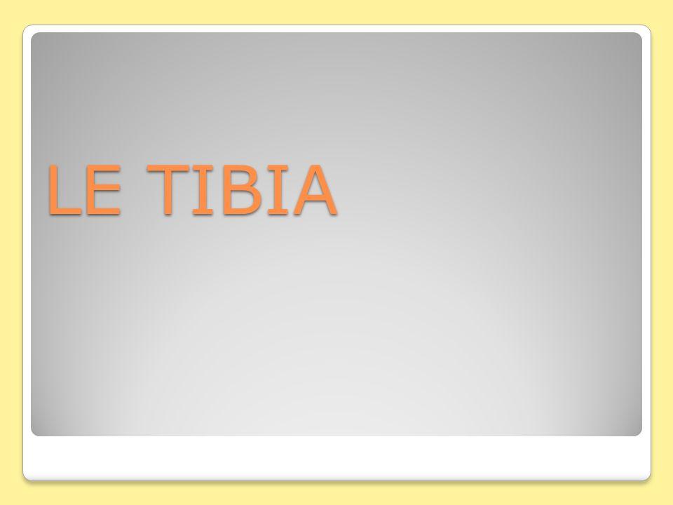LE TIBIA