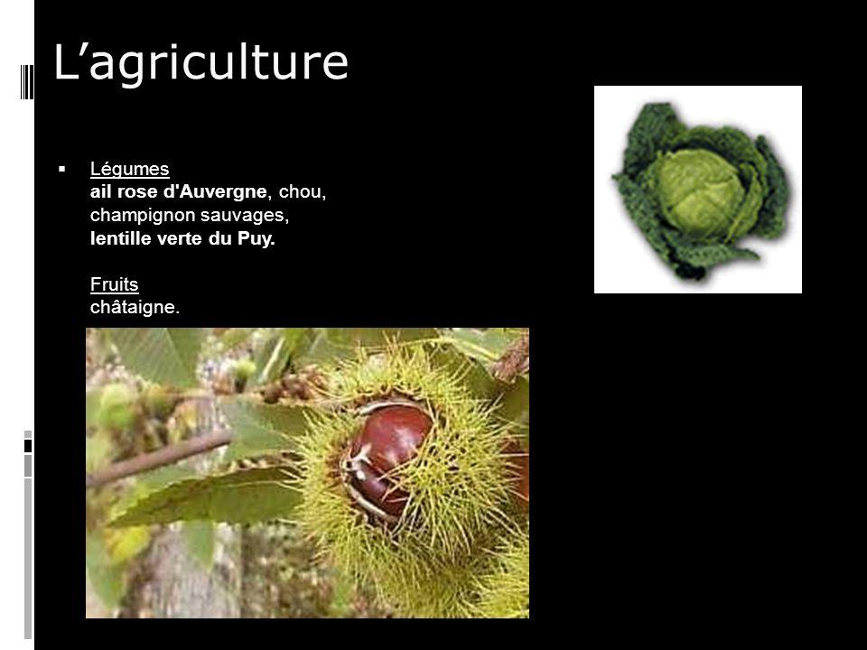 L'agriculture Légumes ail rose d Auvergne, chou, champignon sauvages, lentille verte du Puy.