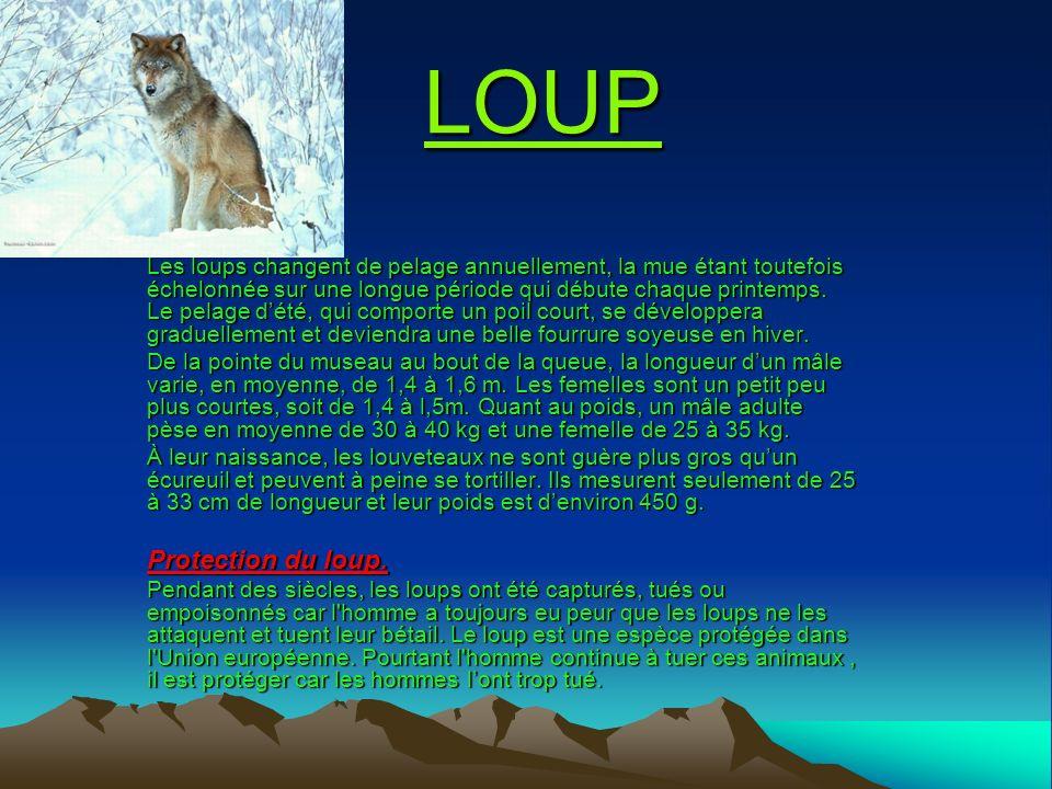 LOUP Protection du loup.