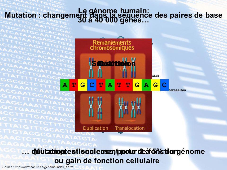 Mutation : changement dans la séquence des paires de base