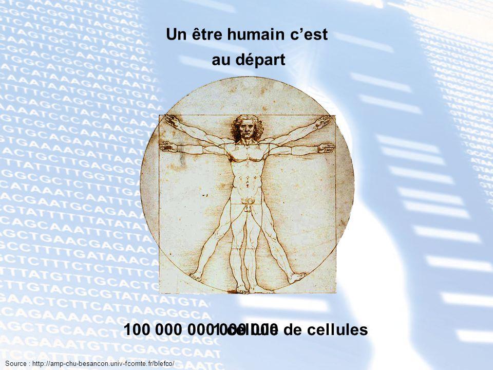 Un être humain c'est au départ 100 000 000 000 000 de cellules
