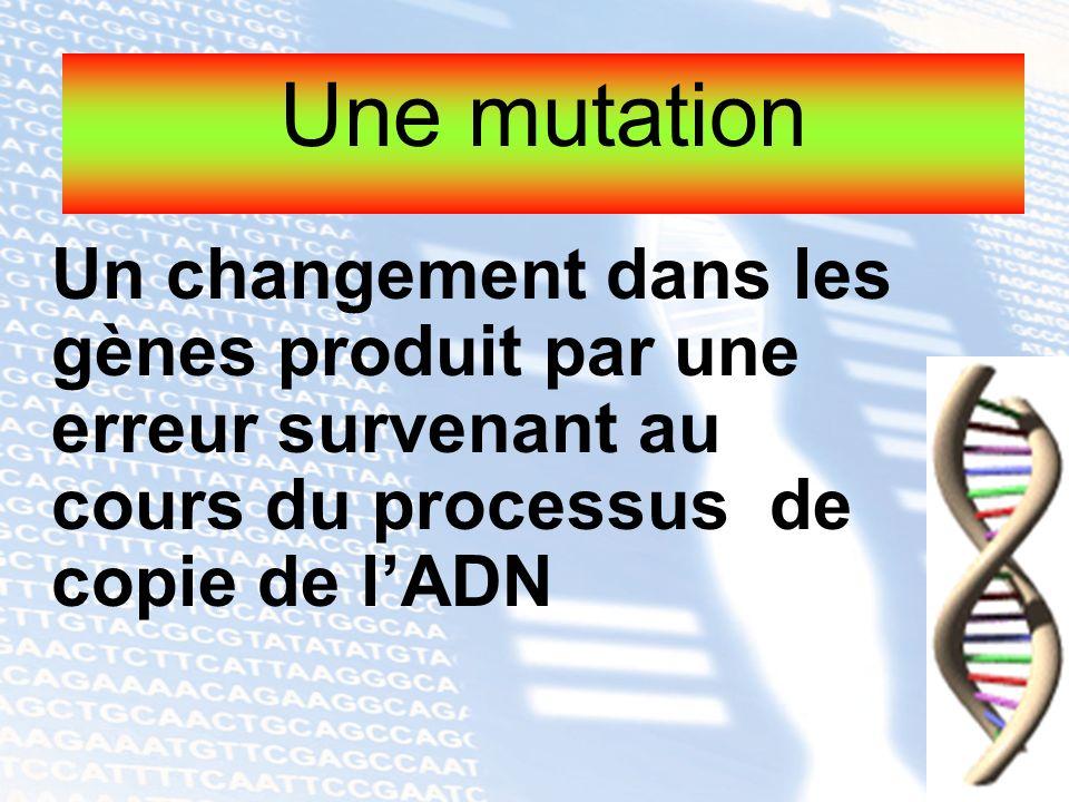 Une mutation Un changement dans les gènes produit par une erreur survenant au cours du processus de copie de l'ADN.