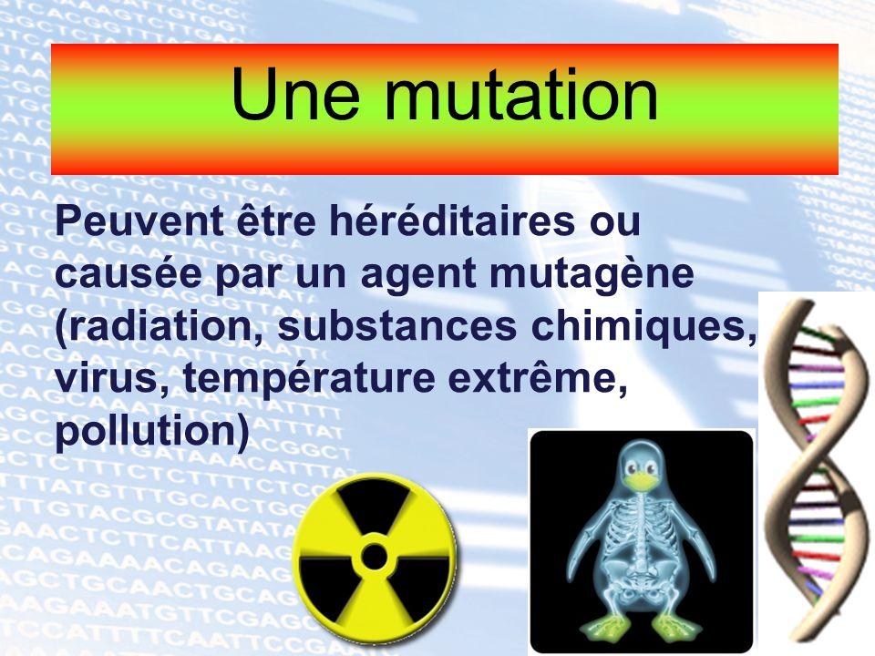 Une mutation Peuvent être héréditaires ou causée par un agent mutagène (radiation, substances chimiques, virus, température extrême, pollution)