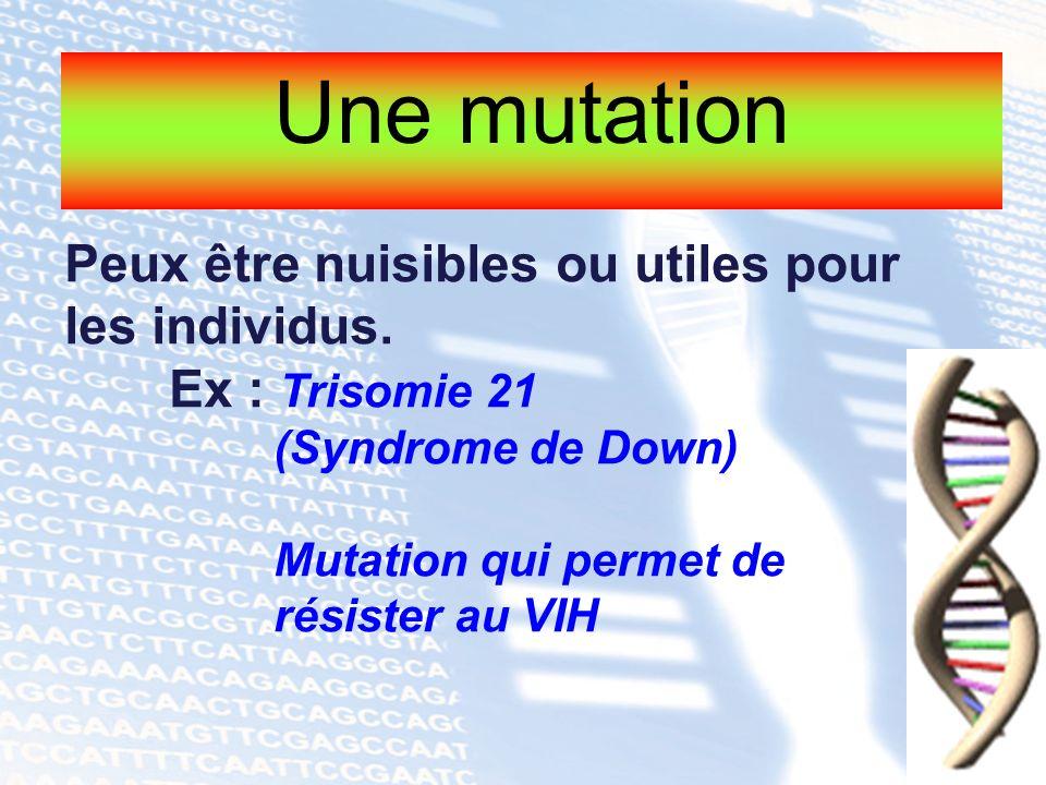 Une mutation Peux être nuisibles ou utiles pour les individus.