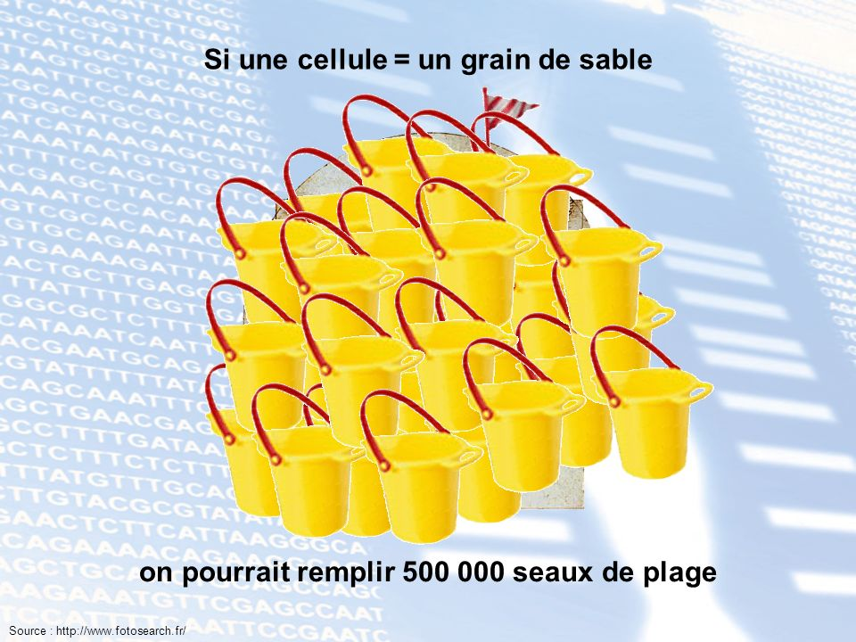 Si une cellule = un grain de sable