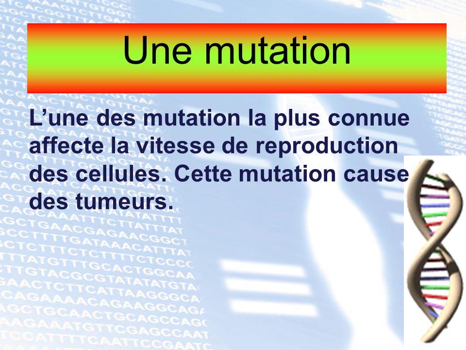 Une mutation L'une des mutation la plus connue affecte la vitesse de reproduction des cellules.
