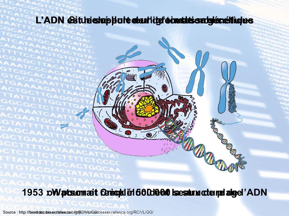 L'ADN est le support de l'information génétique