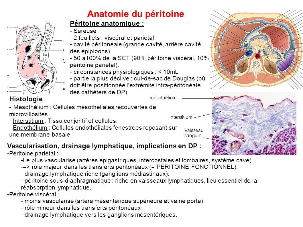 Anatomie du péritoine Péritoine anatomique : Histologie