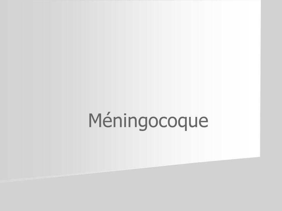 Méningocoque