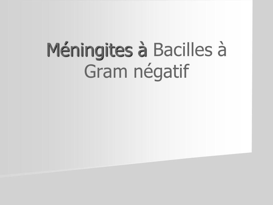 Méningites à Bacilles à Gram négatif