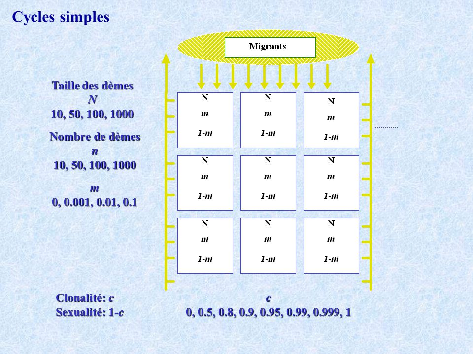 Cycles simples Taille des dèmes N 10, 50, 100, 1000 Nombre de dèmes n