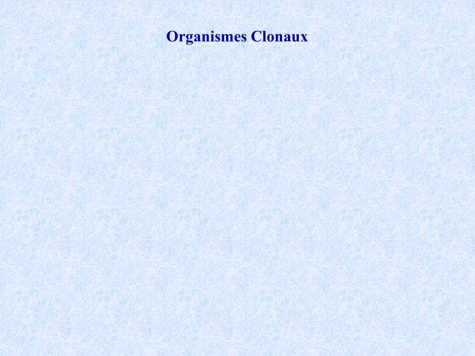 Organismes Clonaux