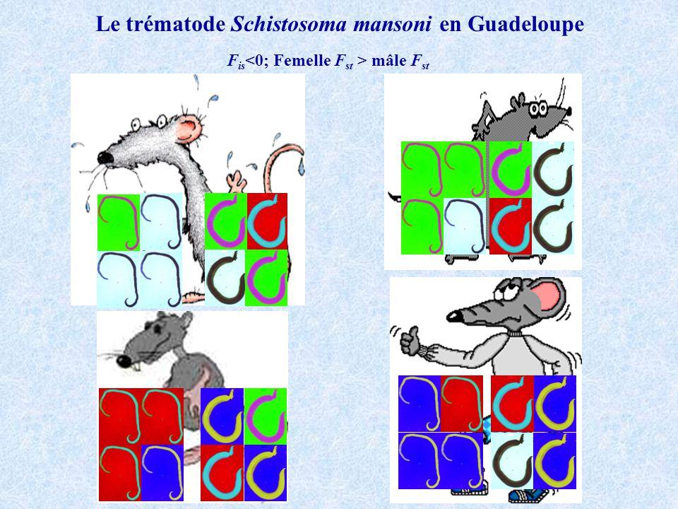 Le trématode Schistosoma mansoni en Guadeloupe