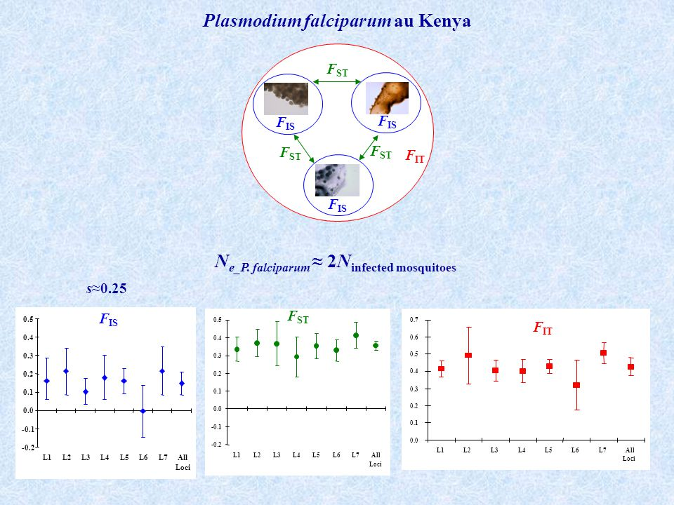 Plasmodium falciparum au Kenya