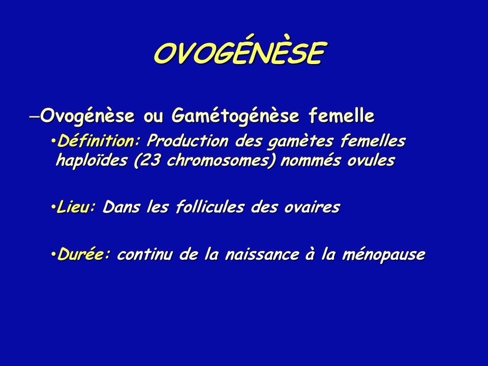 OVOGÉNÈSE Ovogénèse ou Gamétogénèse femelle
