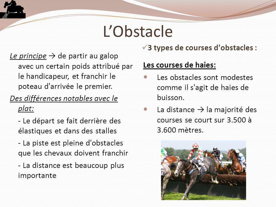 L'Obstacle 3 types de courses d obstacles :