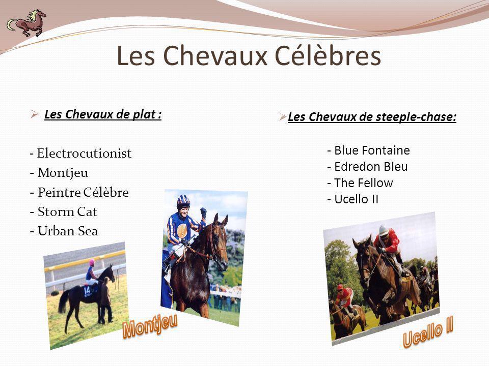 Les Chevaux Célèbres Montjeu Ucello II Les Chevaux de plat :