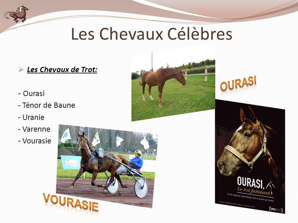 Les Chevaux Célèbres Ourasi Vourasie Les Chevaux de Trot: - Ourasi