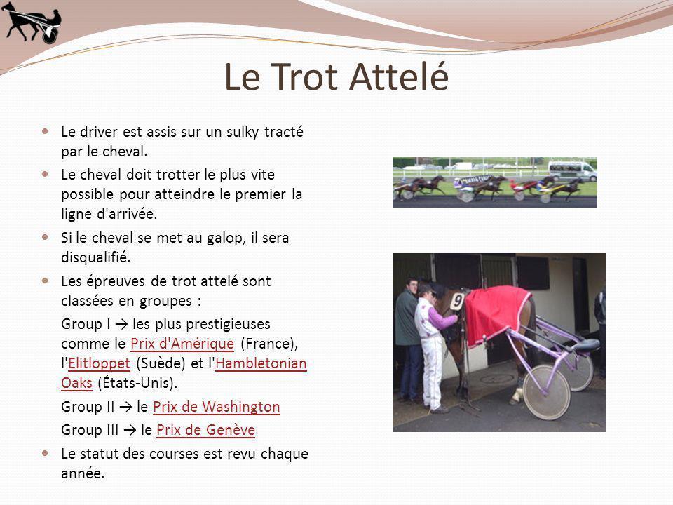 Le Trot Attelé Le driver est assis sur un sulky tracté par le cheval.