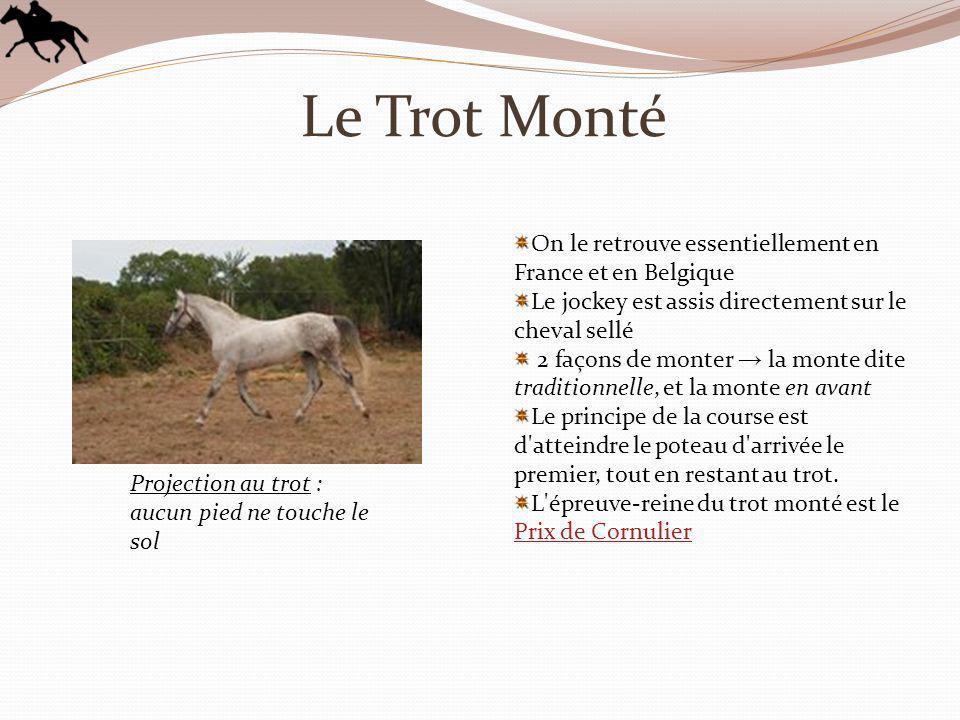 Le Trot Monté On le retrouve essentiellement en France et en Belgique