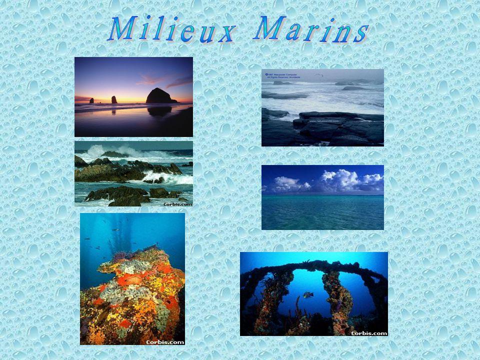 Milieux Marins