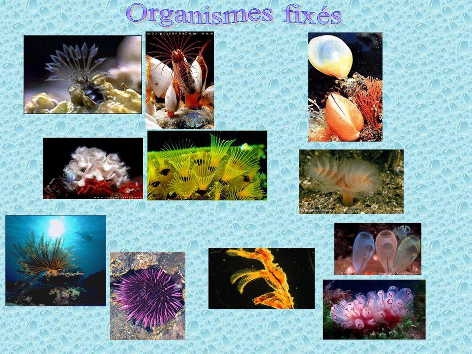 Organismes fixés