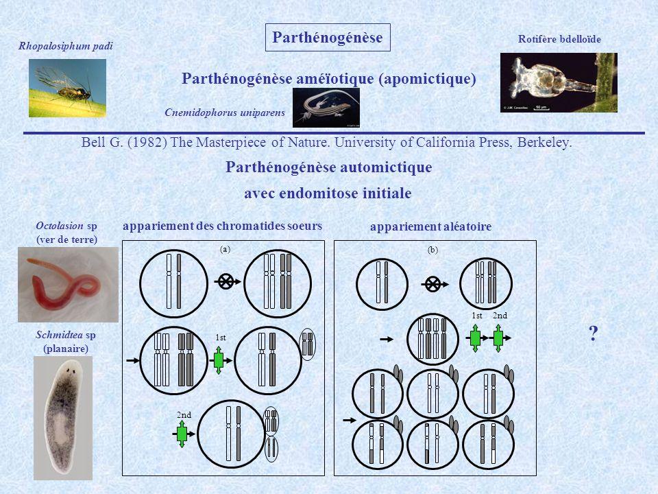 Parthénogénèse Parthénogénèse améïotique (apomictique)