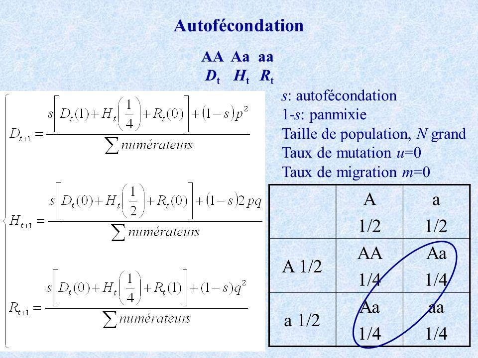 Autofécondation A 1/2 a A 1/2 AA 1/4 Aa a 1/2 aa AA Aa aa Dt Ht Rt