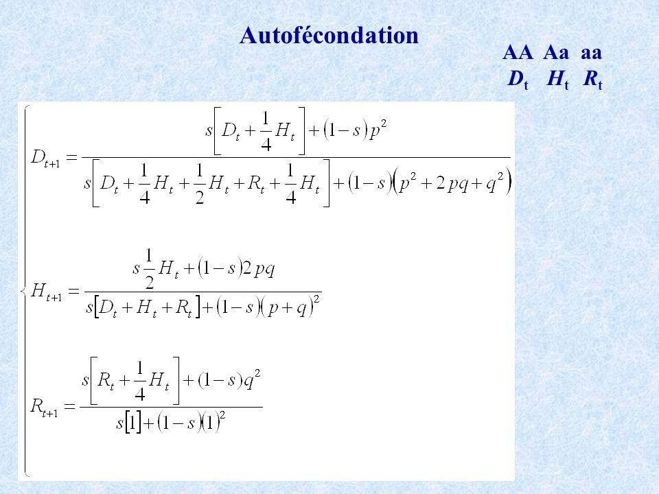 Autofécondation AA Aa aa Dt Ht Rt