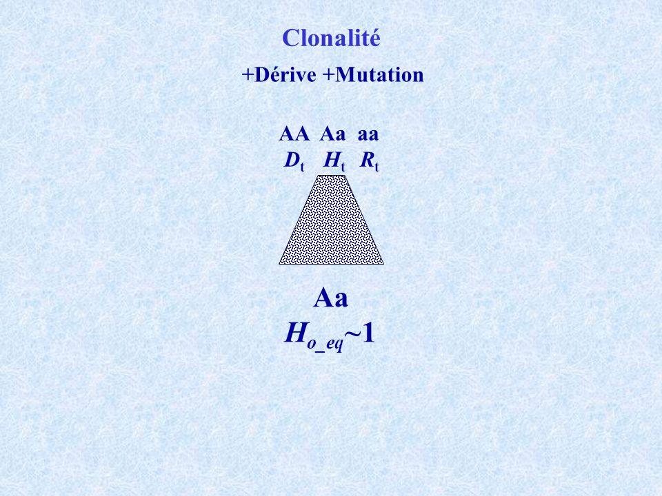 Clonalité +Dérive +Mutation AA Aa aa Dt Ht Rt Aa Ho_eq~1