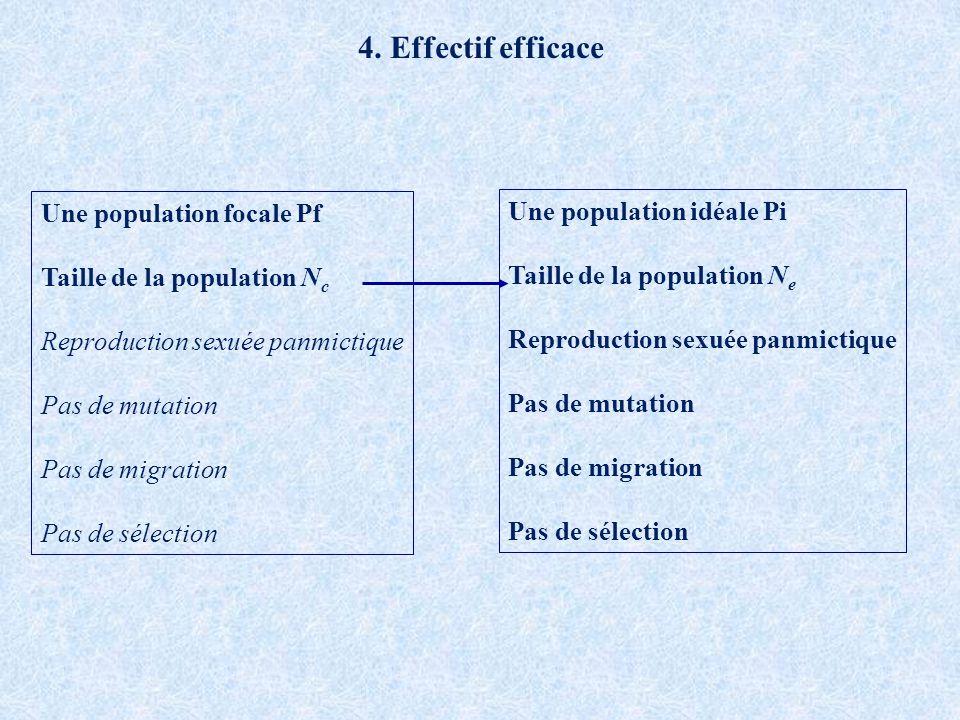 4. Effectif efficace Une population focale Pf Une population idéale Pi