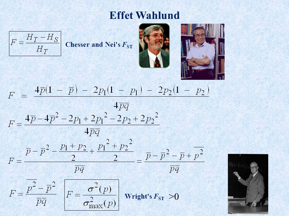 Effet Wahlund Chesser and Nei s FST Wright s FST >0