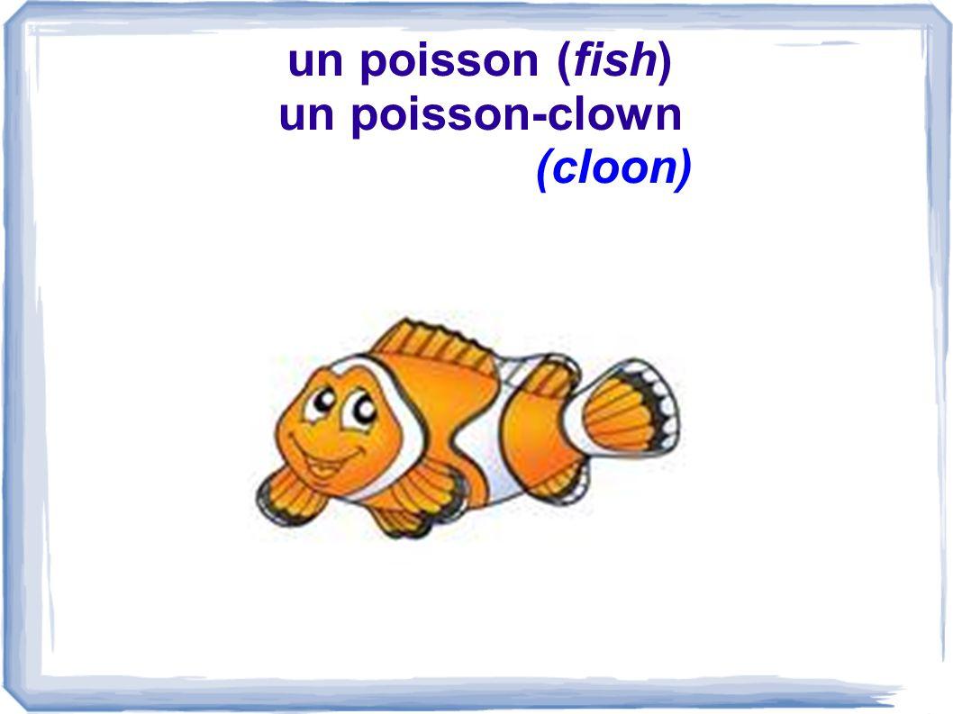 un poisson (fish) un poisson-clown (cloon)