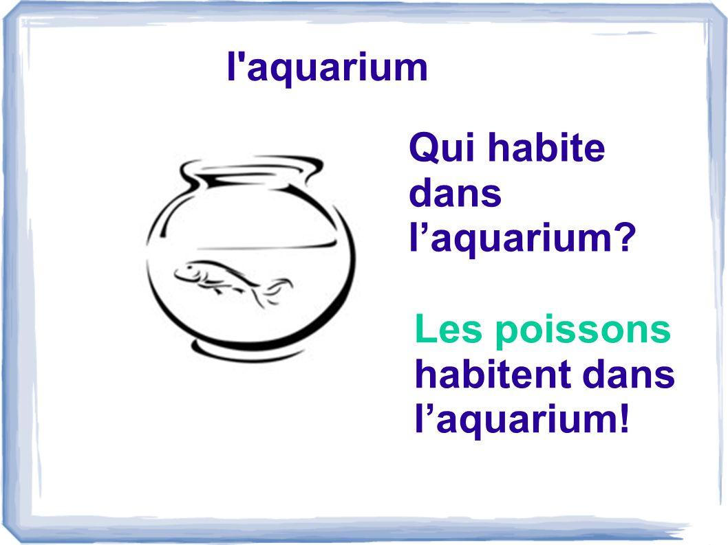 l aquarium Qui habite dans l'aquarium Les poissons habitent dans l'aquarium!