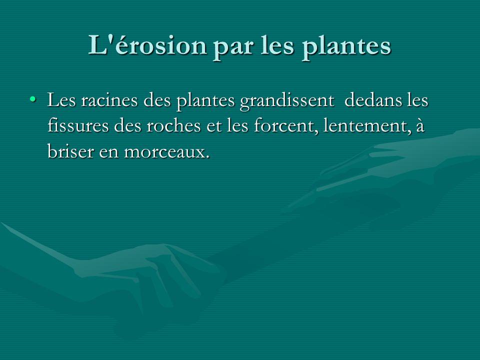 L érosion par les plantes