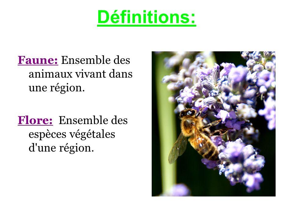 Définitions: Faune: Ensemble des animaux vivant dans une région.
