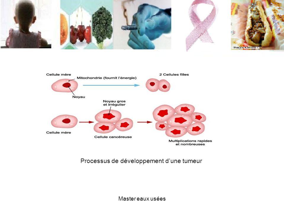 Processus de développement d'une tumeur