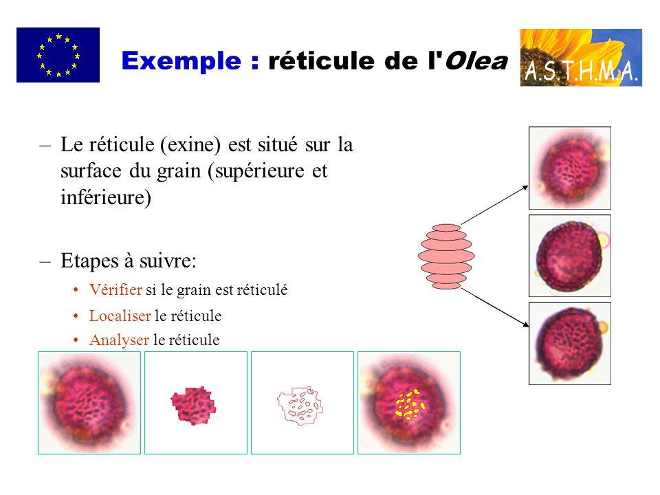 Exemple : réticule de l Olea