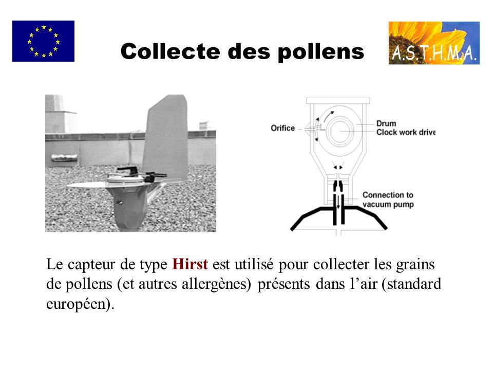 Collecte des pollens