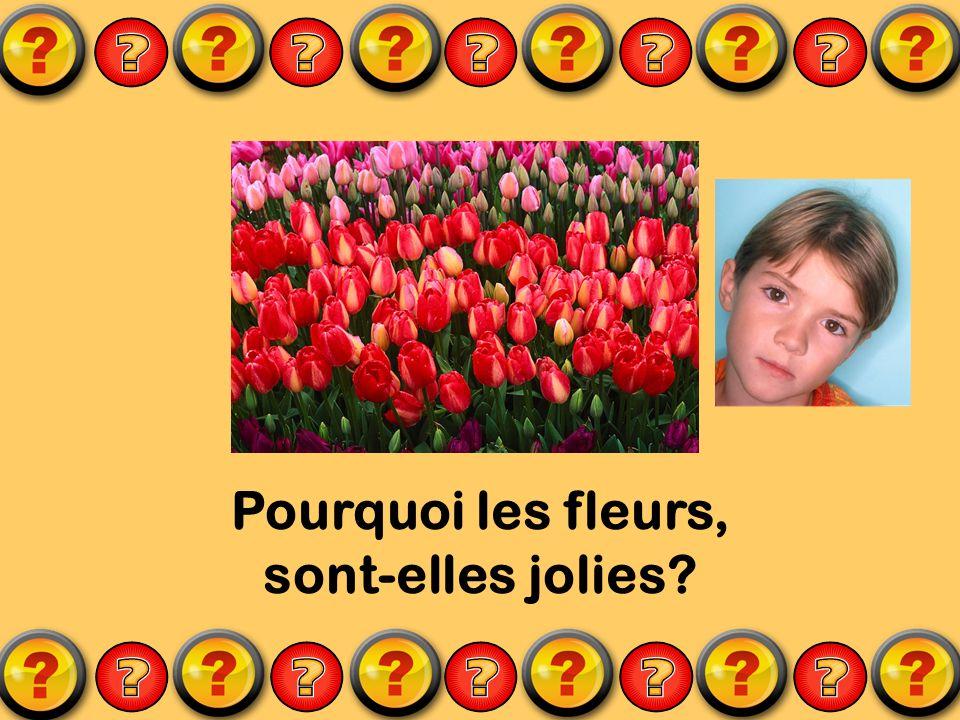 Pourquoi les fleurs, sont-elles jolies